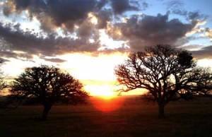 Lumière Silencieuse (Stellet Licht) - Carlos Reygadas - 2007 dans * 100 01-lumieresilencieuse-300x194