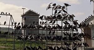 23.-les-oiseaux-the-birds-alfred-hitchcock-1963-1024x553