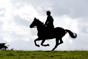 cheval-de-guerre-2012-20256-1893616754