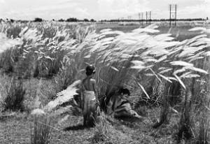02. La Complainte du sentier - Pather panchali - Satyajit Ray - 1955