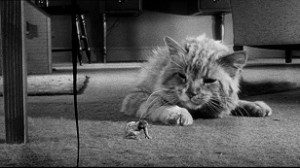 28. L'homme qui rétrécit - The Incredible Shrinking Man - Jack Arnold - 1957